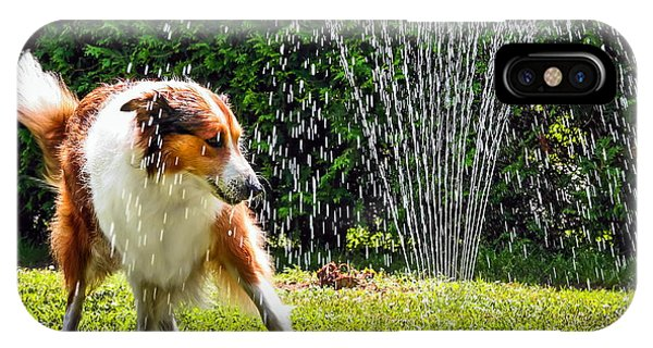 Purebred iPhone Case - The Collie Is Avoiding The Sprinkler In by Dieterjaeschkephotography