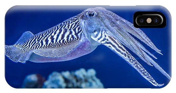 Sea Life iPhone Case - The Common European Cuttlefish Sepia by David Litman