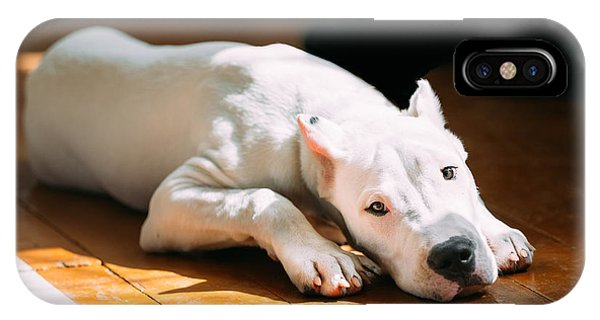 Argentina iPhone X Case - The Dogo Argentino Also Known As The by Grisha Bruev