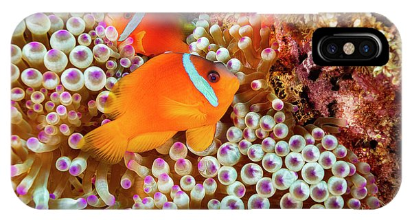 Amphiprion Melanopus iPhone Case - The Fiji Clownfish  Amphiprion Barberi by Dave Fleetham