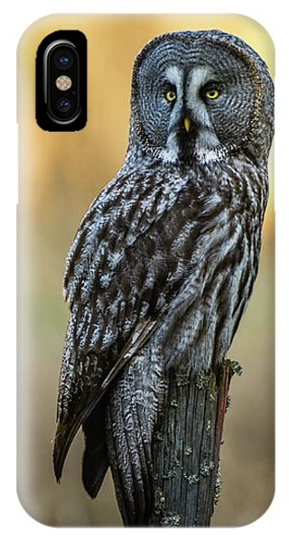 The Great Gray Owl In The Morning IPhone Case