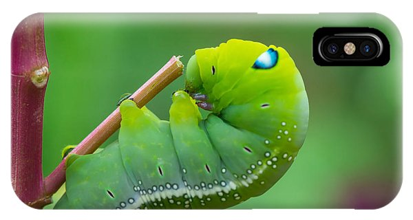 Eating iPhone Case - The Green Worm Creep On Branch,select by Somrak Jendee