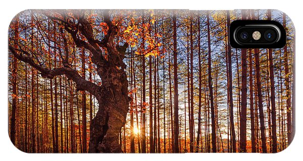 Autumn iPhone Case - The King Of The Trees by Evgeni Dinev