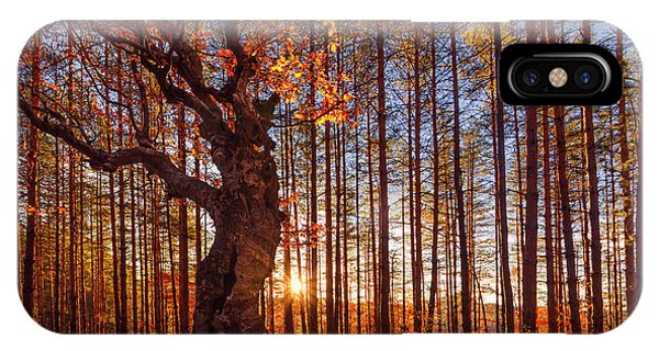 Autumn iPhone X Case - The King Of The Trees by Evgeni Dinev