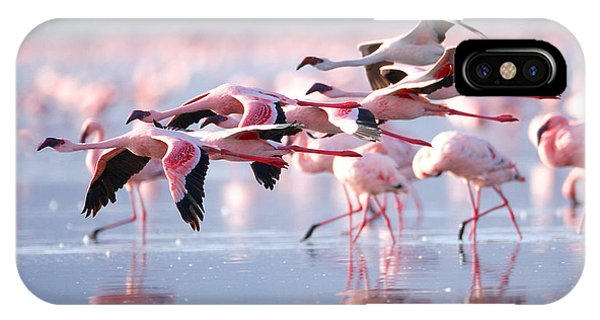 East Africa iPhone Case - The Lesser Flamingo, Which Is The Main by Worldclassphoto