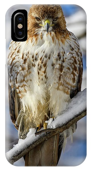 The Look, Red Tailed Hawk 1 IPhone Case