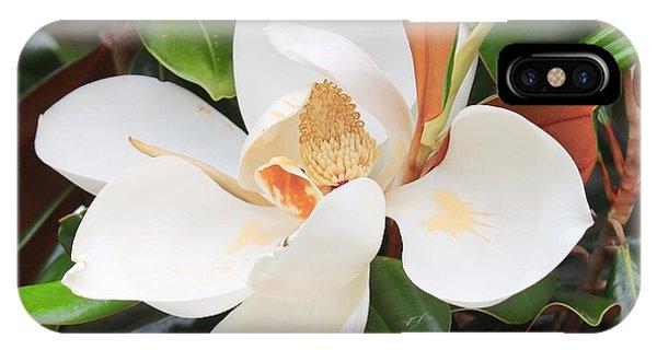 iPhone Case - The Loveliest Magnolia by Carol Groenen