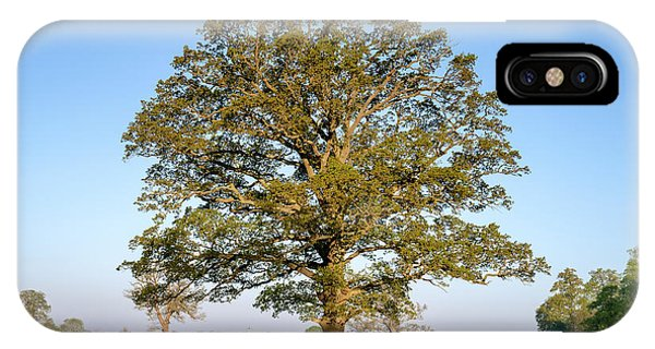 English Countryside iPhone Case - The Mighty Seasonal Oak - Spring by Tim Gainey