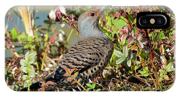 Northern Flicker iPhone Case - The Northern Flicker Is A Medium-sized by Richard Wright