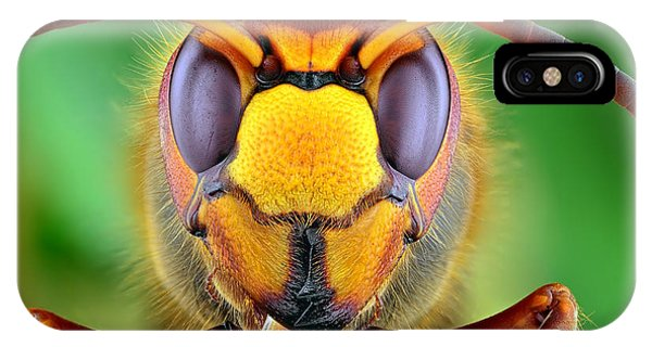 Tint iPhone Case - The Picture Shows Hornet Vespa Crabro by Ireneusz Waledzik