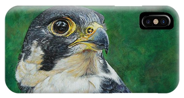 The Proud Peregrine....fastest Creature On The Planet IPhone Case