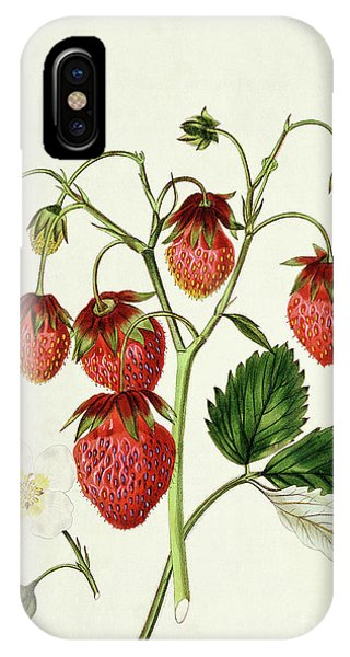 Organic iPhone Case - The Roseberry Strawberry, Engraved By Watte by Edwin Dalton Smith