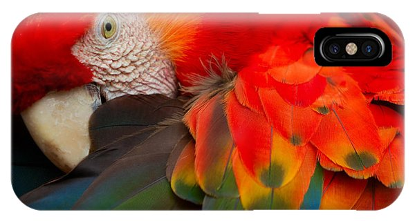 Parrots iPhone Case - The Scarlet Macaw Is A Large Colorful by Ammit Jack