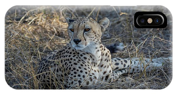 Cheetah In Repose IPhone Case