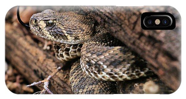 The Western Diamondback Rattlesnake IPhone Case