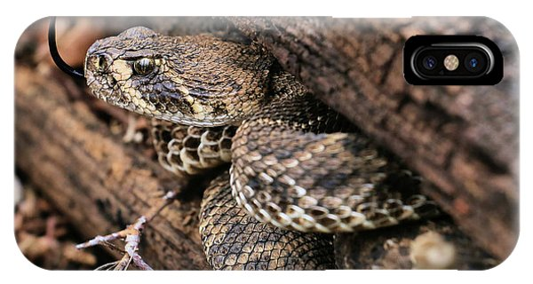 IPhone Case featuring the photograph The Western Diamondback Rattlesnake by JC Findley