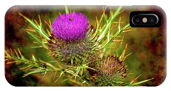 IPhone Case featuring the photograph Thistle Life by Milena Ilieva