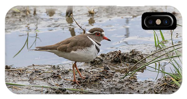 IPhone Case featuring the photograph Three-banded Plover by Thomas Kallmeyer