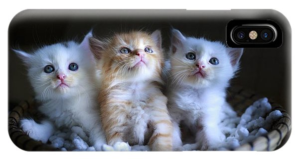 Three Little Kitties IPhone Case