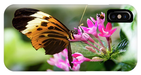 Tiger Longwing Butterfly Drinking Nectar  IPhone Case