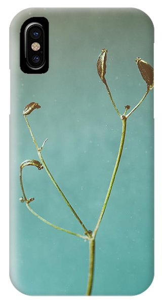 Indoors iPhone Case - Tiny Seed Pod by Scott Norris