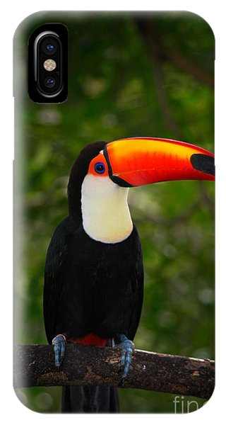 Colombian iPhone Case - Toco Toucan, Big Bird With Orange Bill by Ondrej Prosicky