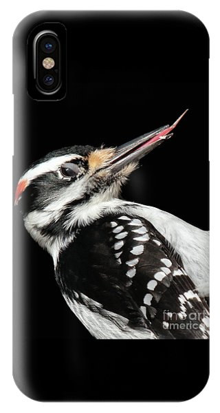 IPhone Case featuring the photograph Tongue Of Woodpecker by Debbie Stahre