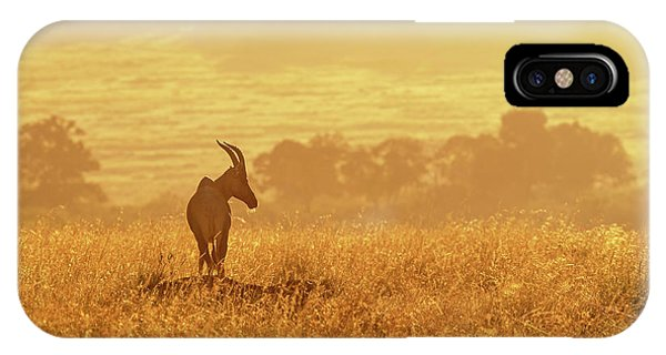 iPhone Case - Topi In Early Morning Sunlight by Jane Rix