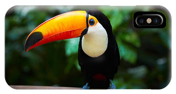 Parrots iPhone Case - Toucan On The Branch In Tropical Forest by Sj Travel Photo And Video