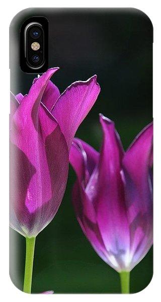 Translucent Tulips IPhone Case