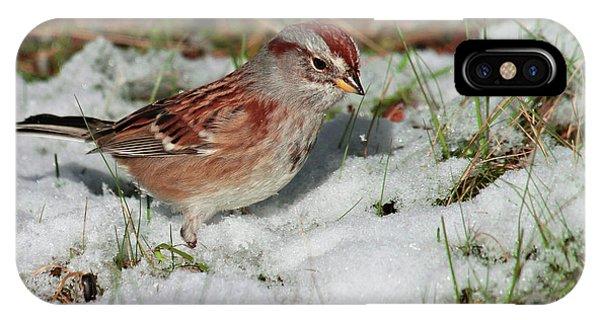 Tree Sparrow In Snow IPhone Case