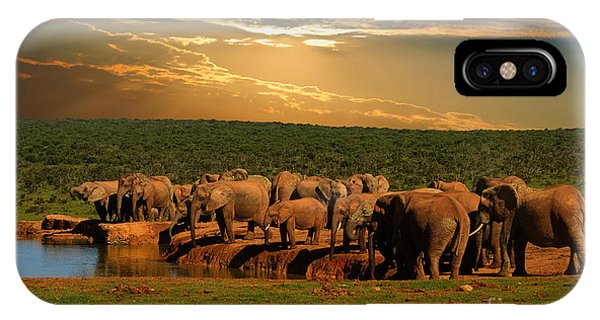 Beautiful Sunrise iPhone Case - Troop, Herd Of Elephant, Loxodonta by Hajakely