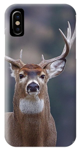 Stag iPhone Case - Trophy Whitetail Buck Deer, Isolated by Tom Reichner