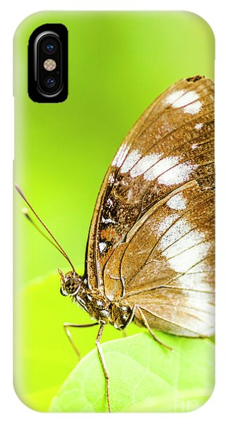Moth iPhone Case - Tropical Exotics by Jorgo Photography - Wall Art Gallery