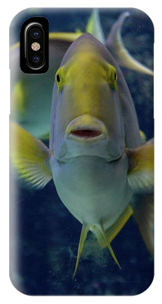 IPhone Case featuring the photograph Tropical Fish Poses. by Anjo Ten Kate