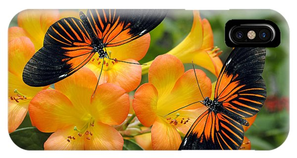 Horticulture iPhone Case - Tropical Rhododendron Simbu Sunset by Peter Etchells
