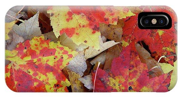 True Autumn Colors IPhone Case