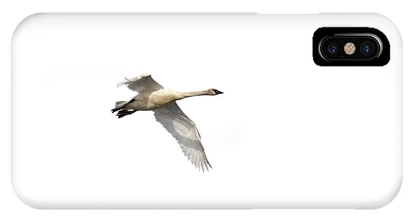 Horicon Marsh iPhone Case - Trumpeter Swan Isolated 2018-1 by Thomas Young