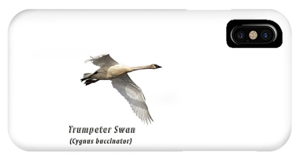 Horicon Marsh iPhone Case - Trumpeter Swan Isolated 2018-2 by Thomas Young