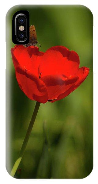 Tulip And Skipper IPhone Case