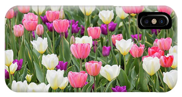 iPhone Case - Tulip Field by Emily Johnson