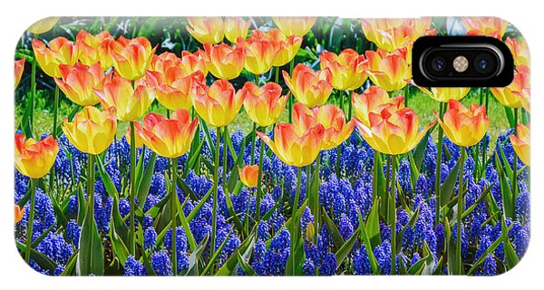 Blossom iPhone Case - Tulips And Muscari Flowers by Sergej Razvodovskij