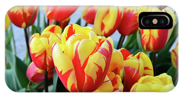 Tulips And Tiger Stripes IPhone Case