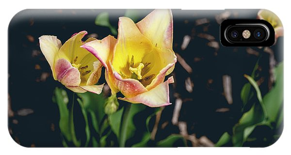 Tulips At Hershey Gardens IPhone Case