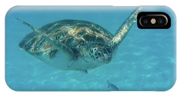 Turtle Approaching IPhone Case