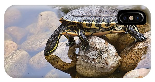 Turtle Drinking Water IPhone Case