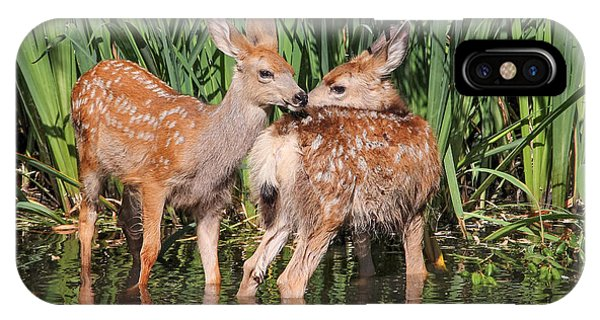 Sister iPhone Case - Twin Fawns Nuzzling Each Other In A by Annette Shaff