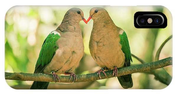 Two Colourful Doves Resting Outside On A Branch. IPhone Case