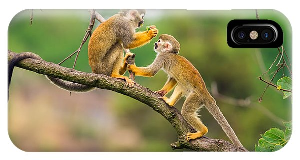 Colombian iPhone Case - Two Common Squirrel Monkeys Saimiri by Nick Fox