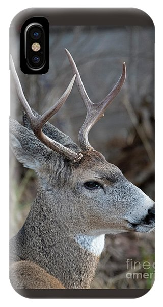 Mule Deer iPhone Case - Two-point Profile by Mike Dawson